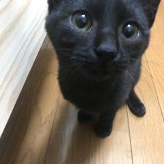 ミックス猫 Pinoくん 5カ月 ふんわり羽毛ラグM ご愛用中